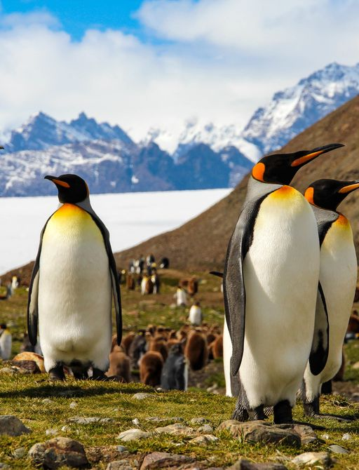 penguins on shore in Antarctica, with snowy mountain range in background