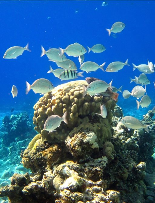 Fish and coral in the Great Barrier Reef, Australia