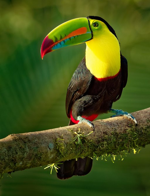 Parrot on branch of tree in Belize