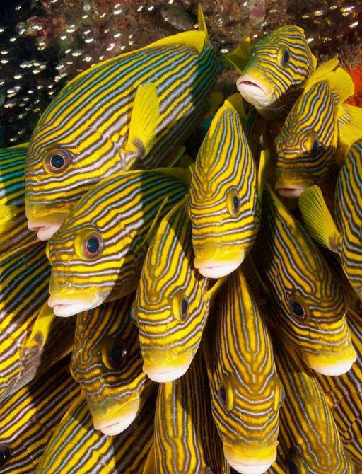 Fish in Raja Ampat islands