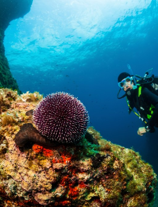 Coral and diver in Greece