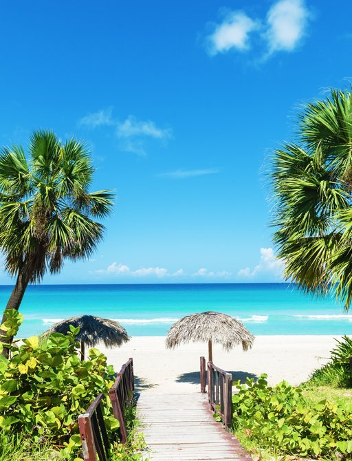 Beach and palm trees in the Caribbean with blue sea