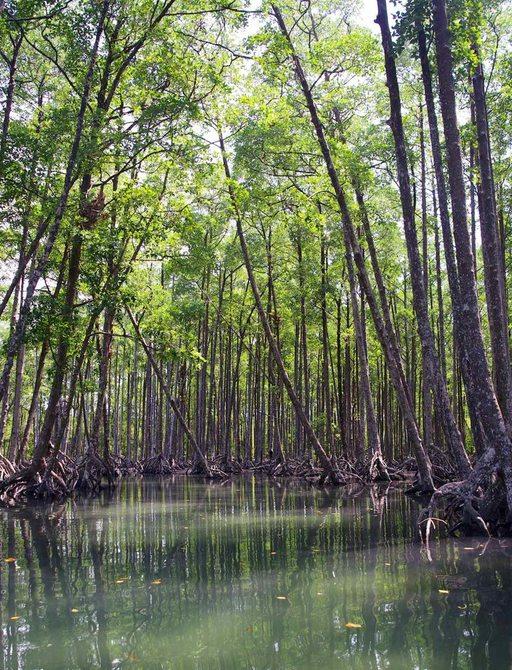 Mangrove forests, Lampi National Park