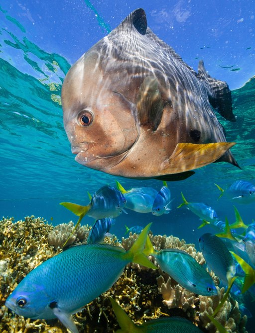 fascinating fish in the clear waters of the Great Barrier Reef, Australia