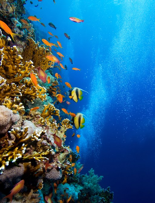 Photo of coral colony with colourful fish in Fiji