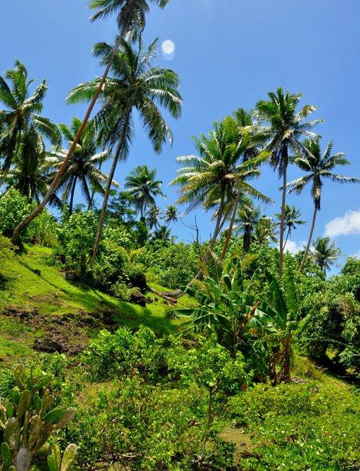 Taha'a in Tahiti
