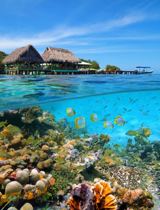 Underwater seascape in the Caribbean