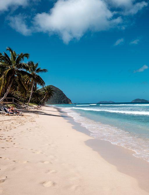 Sandy beach with palm trees in British Virgin Islands