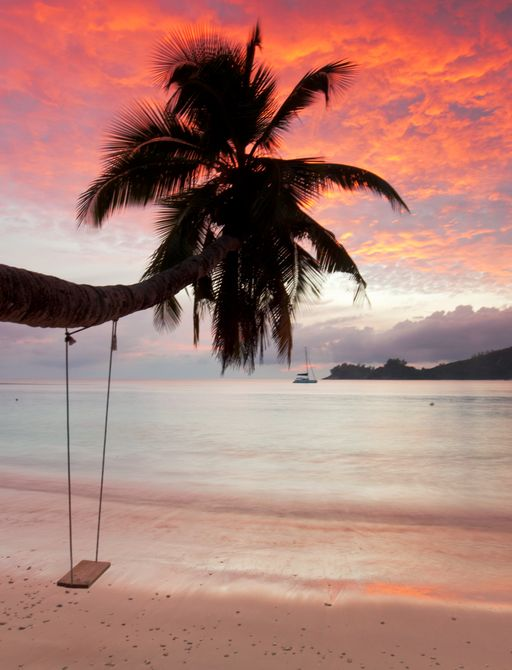 sunset in the seychelles with swing hanging from palm tree above the sea