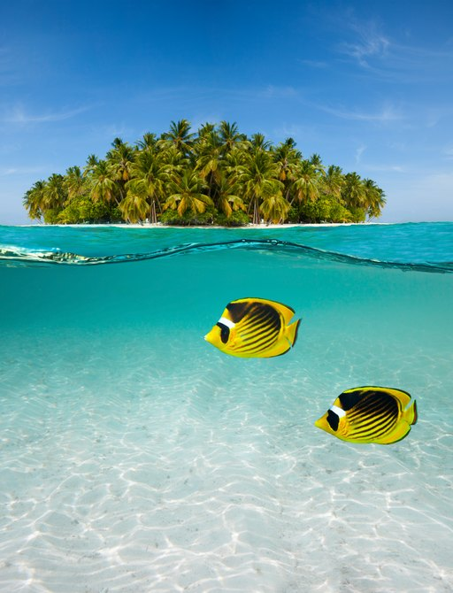 Colorful fish in clear water, with small tree laden atoll visible above water