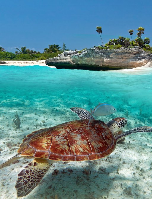 Turtle below the surface of the sea in Mexico, with island seen above