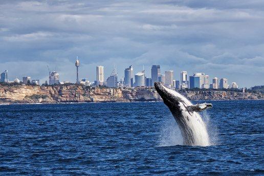 Sydney photo 30