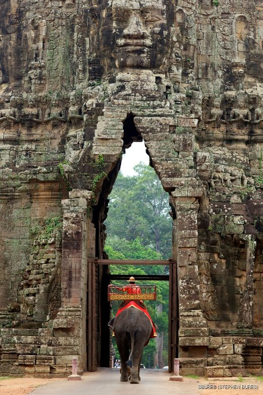 Man on decorated elephant passing through the gate