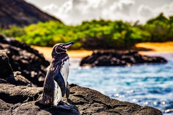 Galapagos yacht charters available with motor yacht 'Tip Top IV'