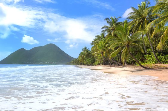 palm tree-lined, white sand beach in Martinique with mountain in the background