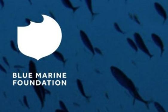 Blue Marine Foundation Unites Yachting Community to Protect the Oceans