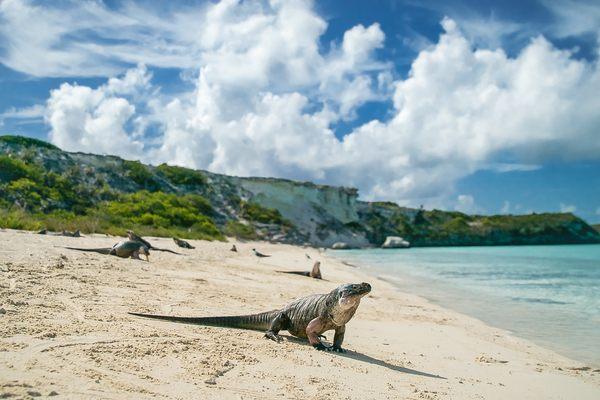 Discover Mayaguana