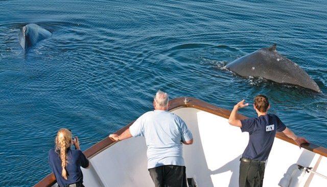 Safari Explorer Charter Yacht - 2