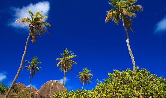 A Week Exploring The British Virgin Islands