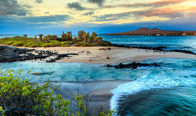 The Natural Wonders of the Galapagos