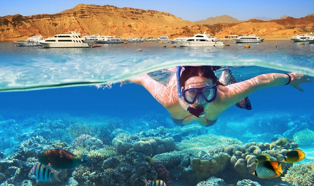 The Underwater Paradise of the Red Sea