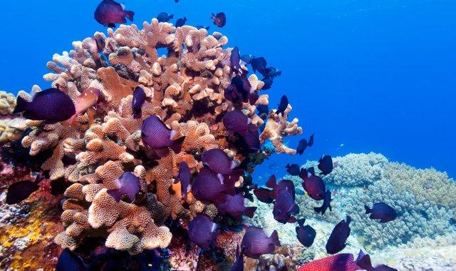Explosive Alor – Exploring The Alor Archipelago