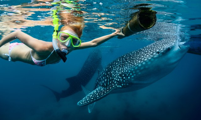 The whale shark pod of Thanda Island