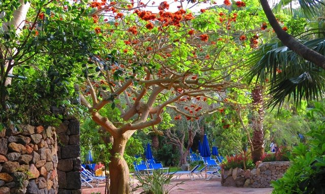 Negombo Thermal Gardens