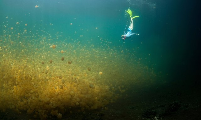 Discover 'Jellyfish Lake' on a Yacht Charter in Palau Islands