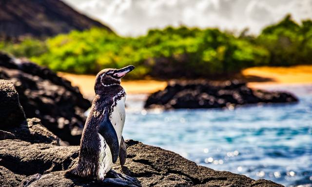 Galapagos yacht charters available with M/Y 'Tip Top IV'