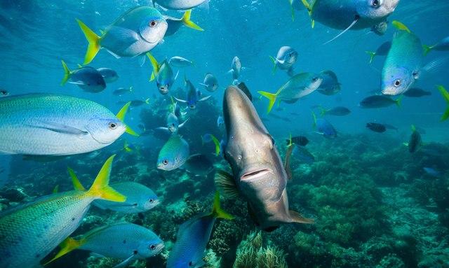 M/Y 'Mystic Tide' Open In The Great Barrier Reef