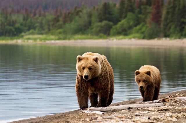 Spot some bears at Redoubt Lake