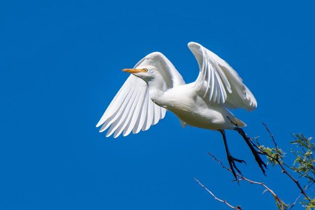 Thanda Bird Walk