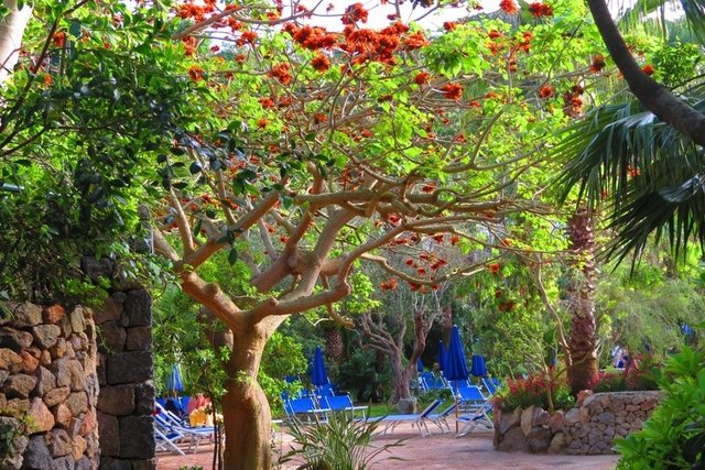 Negombo Thermal Gardens