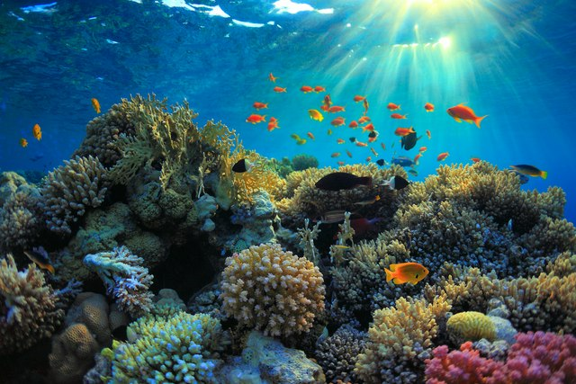 The Aquarium at O'Brien's Cay