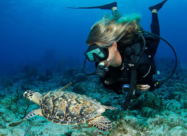 Five of the Best Dive Sites in Komodo National Park