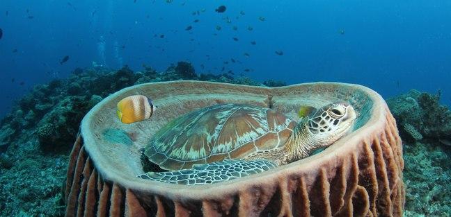 Meet Sea Turtles on an Unforgettable Dive
