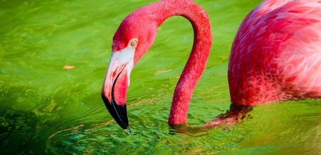 Meet the Local Wildlife in Florida