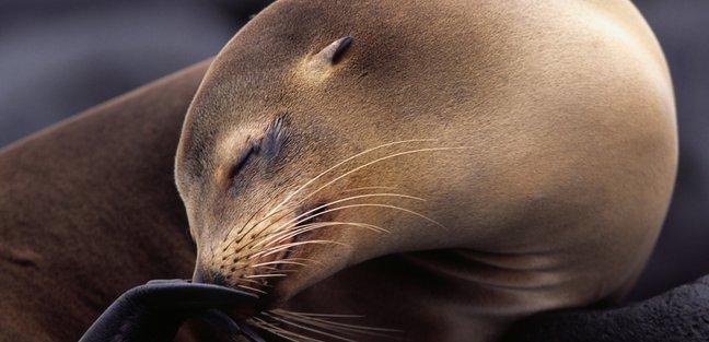 Galapagos Islands photo 4