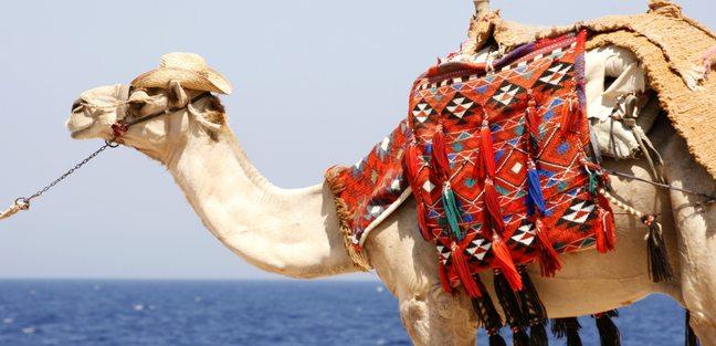 Egypt & Red Sea photo 3