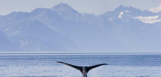 Alaska photo 3