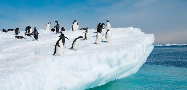 Antarctica photo 5