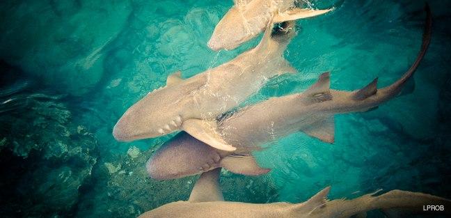 Marshall Islands photo 5