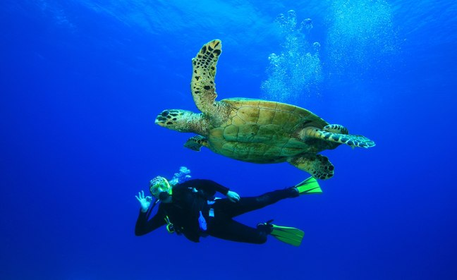 Scuba diver swimming with sea turtle in Caribbean