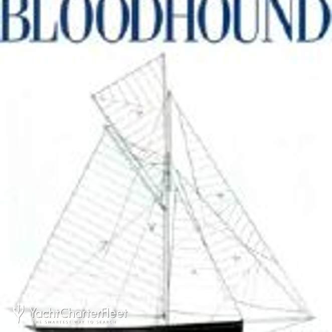Bloodhound photo 3