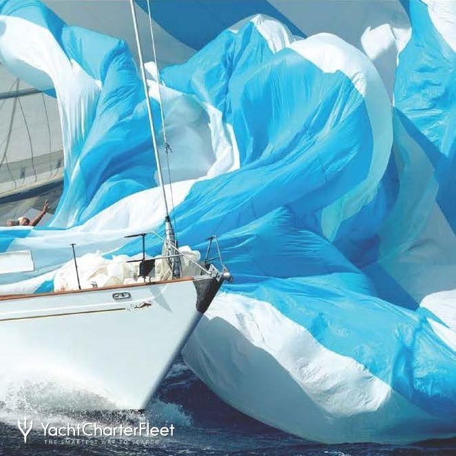 Whitefin photo 3