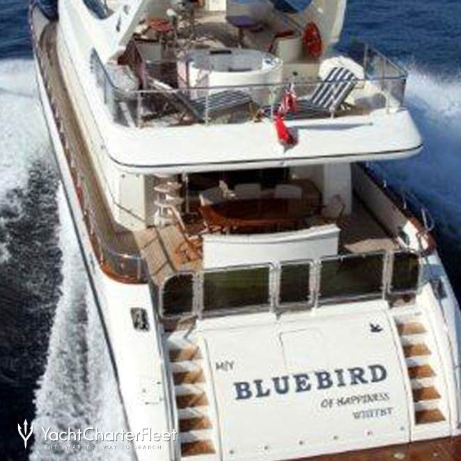 Bluebird of Happiness photo 5
