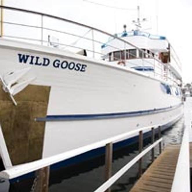 Wild Goose photo 3