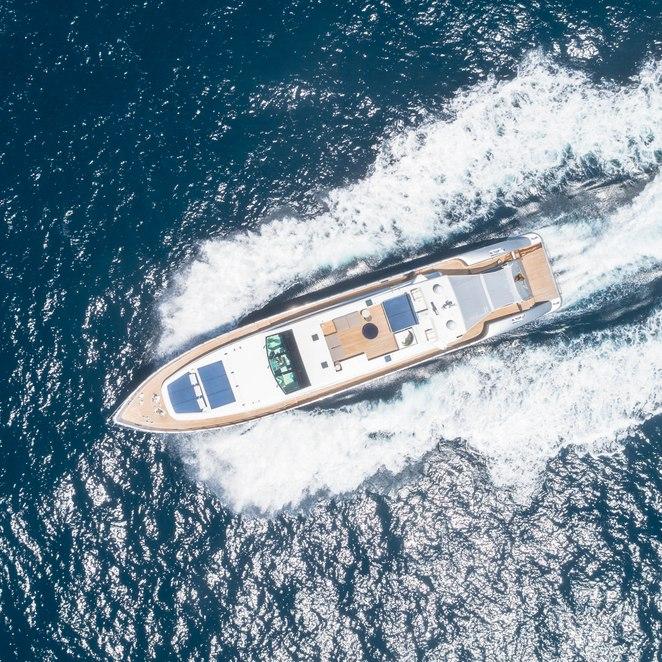 Blue Jay photo 40