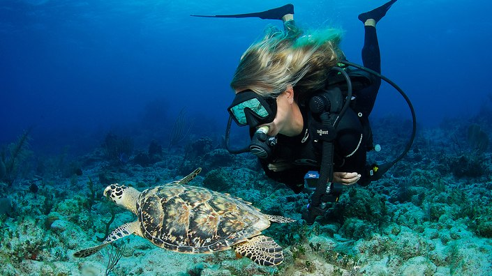 scuba diver and turtle in Komodo, Indonesia